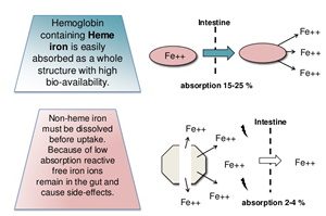 Iron Absorption Diagram
